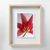 林雅之 「LF011 Tulipa チューリップ」