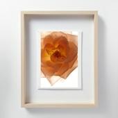林雅之 「LF017 Rose バラ」