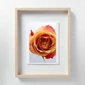林雅之 「LF041 Rose バラ」
