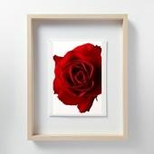 林雅之 「LF052 Rose バラ」