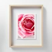 林雅之 「LF053 Rose バラ」