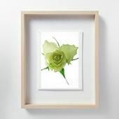 林雅之 「LF058 Rose バラ」