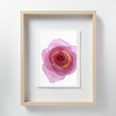 林雅之 「LF059 Rose バラ」