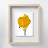 林雅之 「LF060 Calla lily カラー」