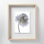 林雅之 「LF061 Ranunculus ラナンキュラス」